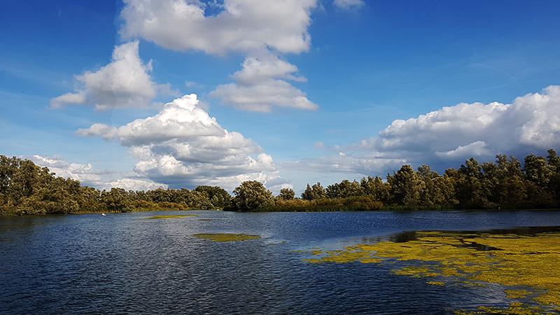 Gat van de buisjes - Biesbosch